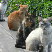 kitty-cats-at-packwood-jpeg