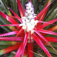 spikey-red-plant-in-the-garden