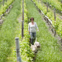 vicky in vineyard with doggies