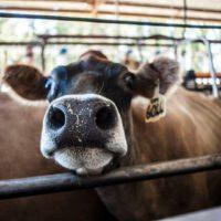 Packwood dairy (14)