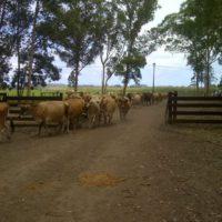 Packwood dairy (17)