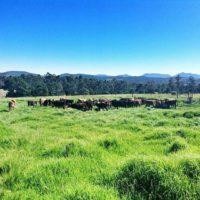 Packwood dairy (2)