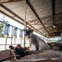 Packwood dairy (4)