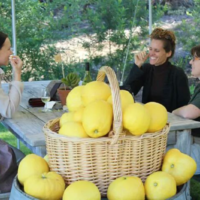 giant-lemons-from-the-garden-jpeg