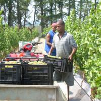 work in progress 2010 harvest